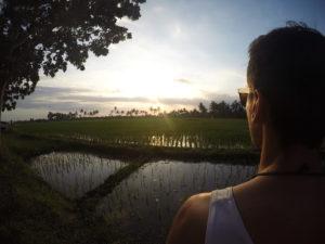 vyhled na ryzove pole