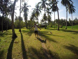 Palmový les na západním pobřeží